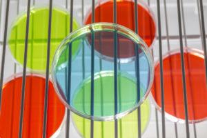 Petri dishes on incubator shelves.